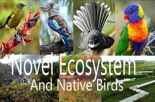 Ecosystems and Native Birds