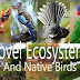 Do Novel Ecosystems Provide the Use for Some Native Birds?