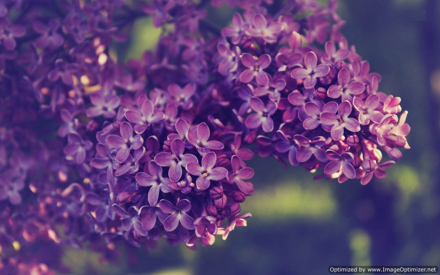 Lilac Wallpapers - LyhyXX.com