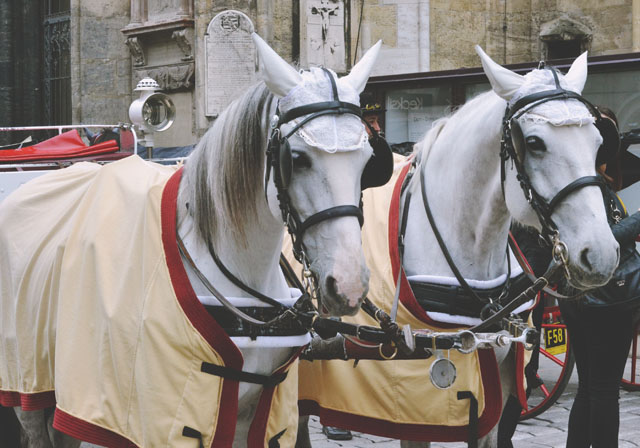Vienna horses