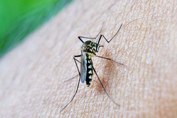 Συναγερμός: Στην Αργολίδα και η δεύτερη νεκρή από τον ιό του Δυτικού Νείλου