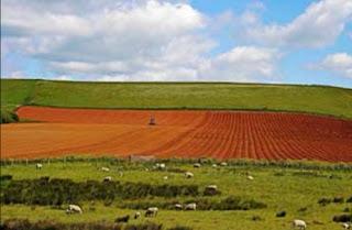 الزراعة المختلطة