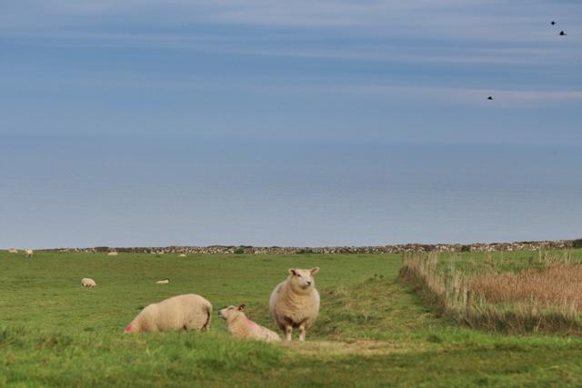 Cada oveja con su pareja
