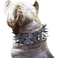 Köpeğin boynunda çivili dikenli tasma