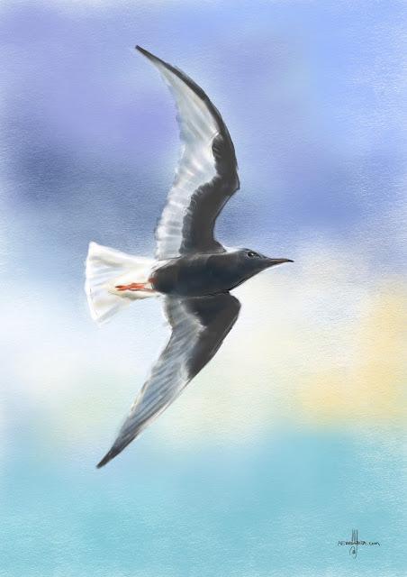 White-winged tern bird painting by Artmagenta