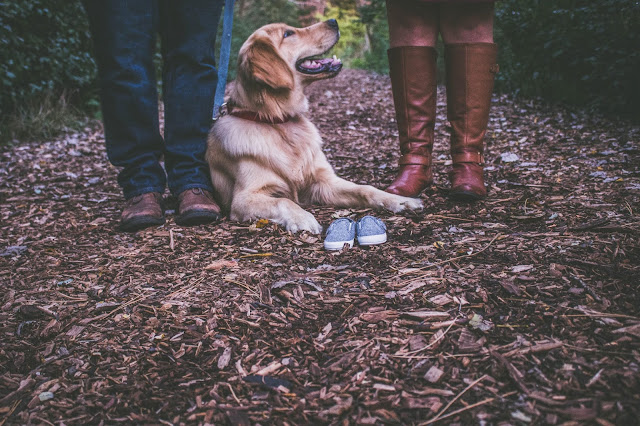 useful tips and where to go camping with dogs australia