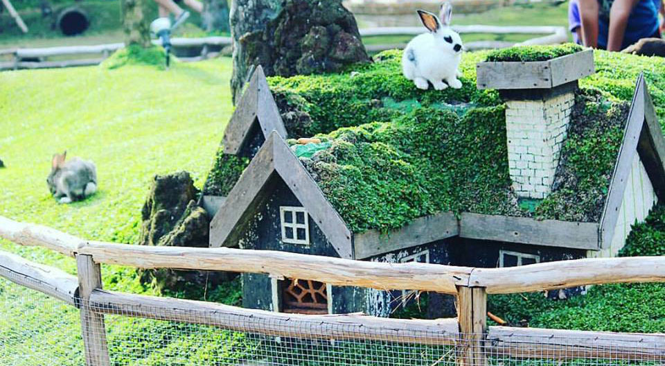 Foto Rabbit Park Blitar