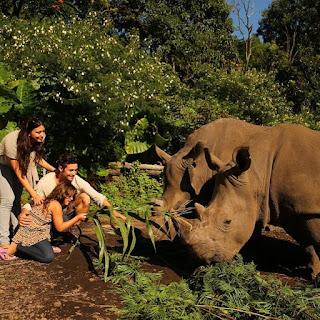 UPDATE Harga Tiket Masuk Taman Safari Prigen 2017