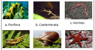 910 Gambar Dari Hewan Invertebrata Terbaik