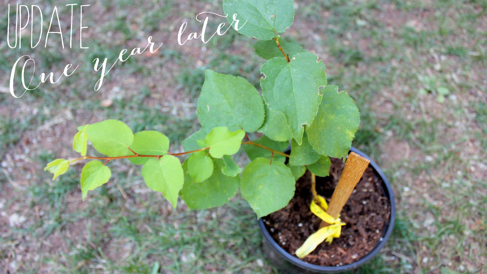 Source For Learning How To Grow Apricot Trees From Seeds Here Ehow Home Nutritional Benefits Of B 17 Are Livestrong Mom