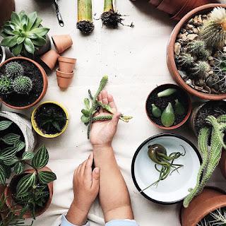 Rośliny i dzieci