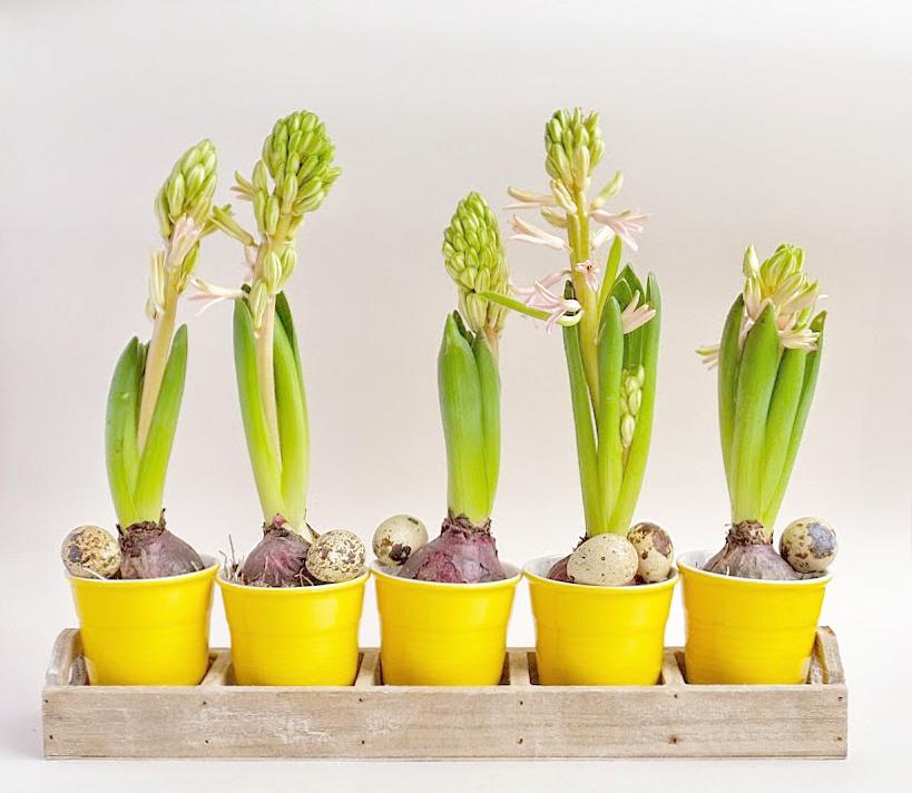 Creatief met bloembollen (Decoratie)
