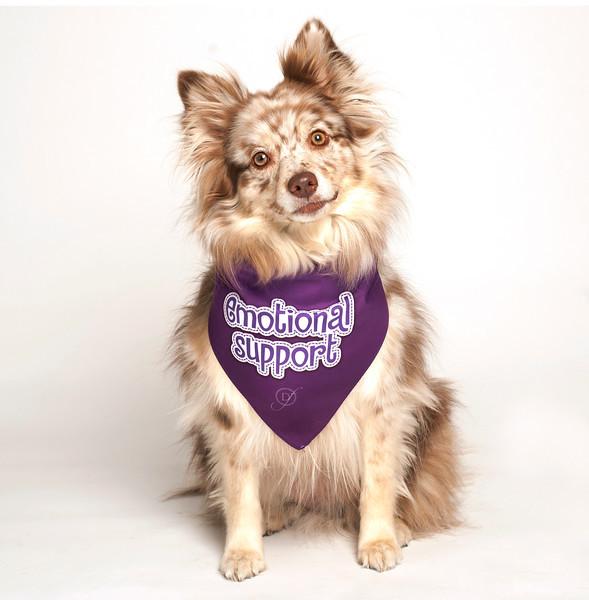 Service Dog Emotional Support Vest