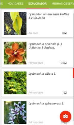 Aplicativo ajuda pessoas a identificar plantas a partir de fotos