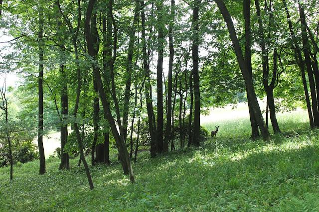 Pötzleinsdorfer Schloßpark Deer