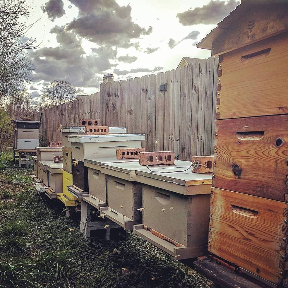 rumah lebah madu