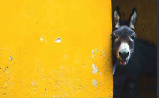 Donkey hide behind door