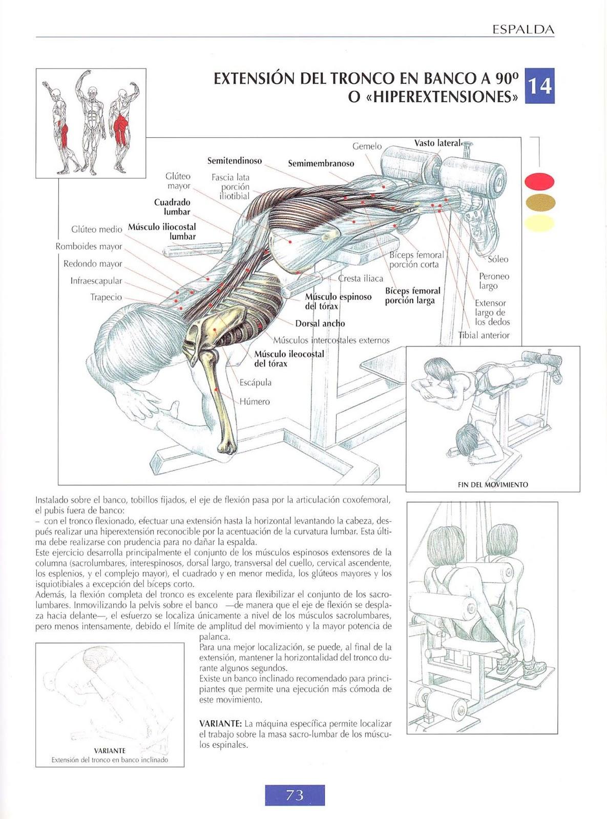 La barra fija de la osteocondrosis