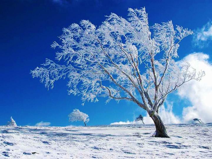 kışın ortasında tek başına kalan kış resimleri