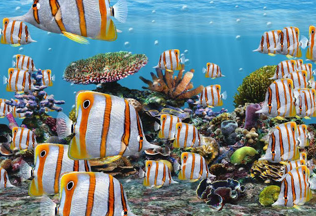 Butterfly Fish facts, information and pictures 9