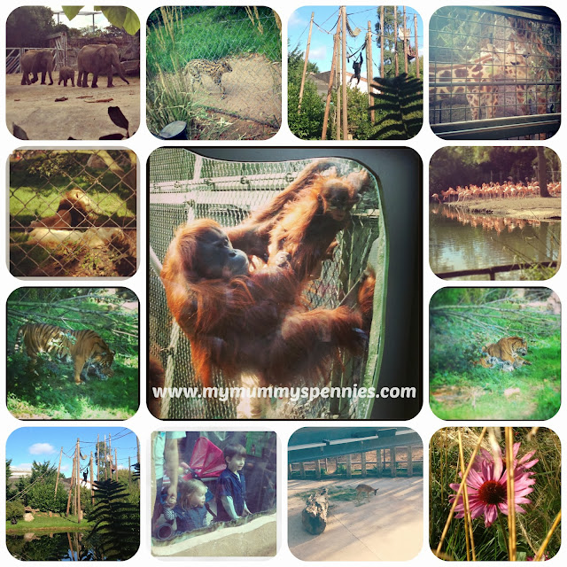 Exploring with the animals at chester zoo