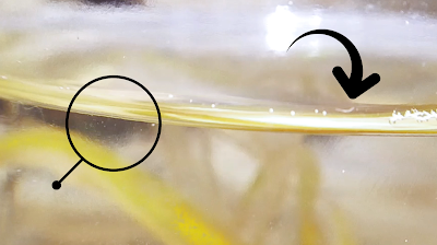 Macro view of infusoria culture with microorganisms on the left side and a detritus worm on the right side