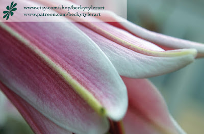 Oriental Lily, Digital Photography