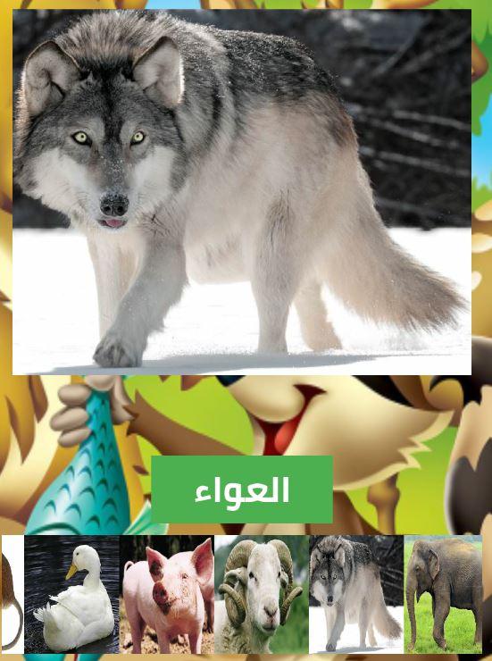 تطبيق أسماء و أصوات الحيوانات بالصوت و الصورة ....... 4