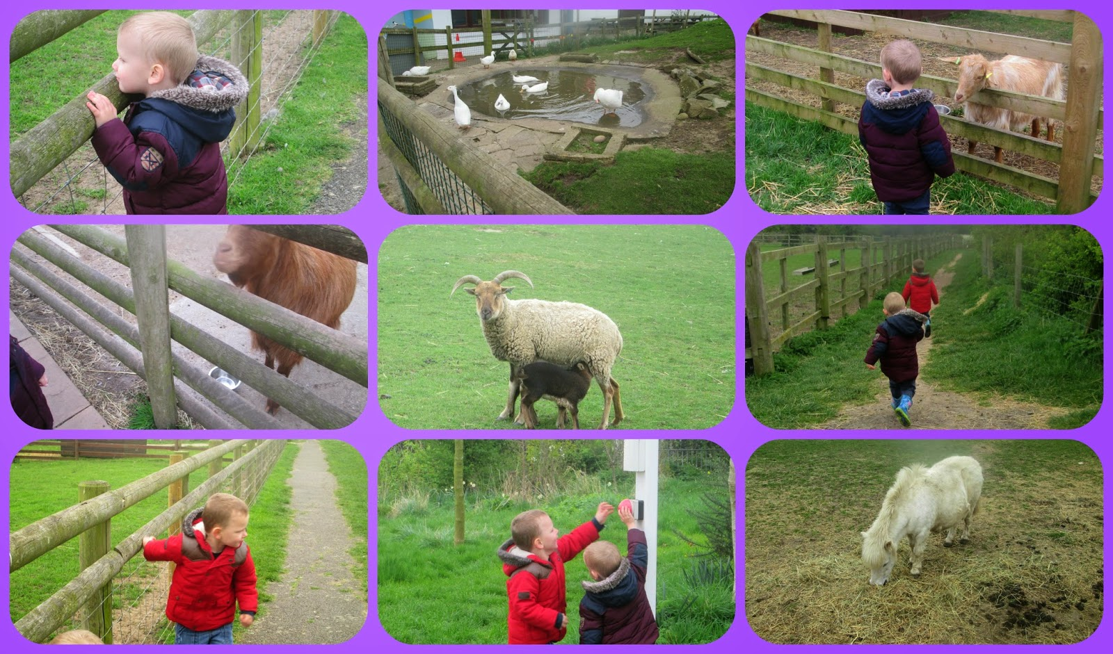 A city farm Gorse hill family farm Leicester