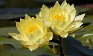 善恶皆有果报,佛学因果不落宿命 | 第三世多杰羌佛, 佛教, 修行, 快樂人生