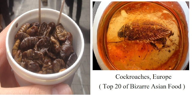 Cockroaches, Europe- top 20 of bizarre asian food