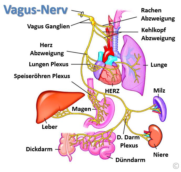 nervensystem beruhigen