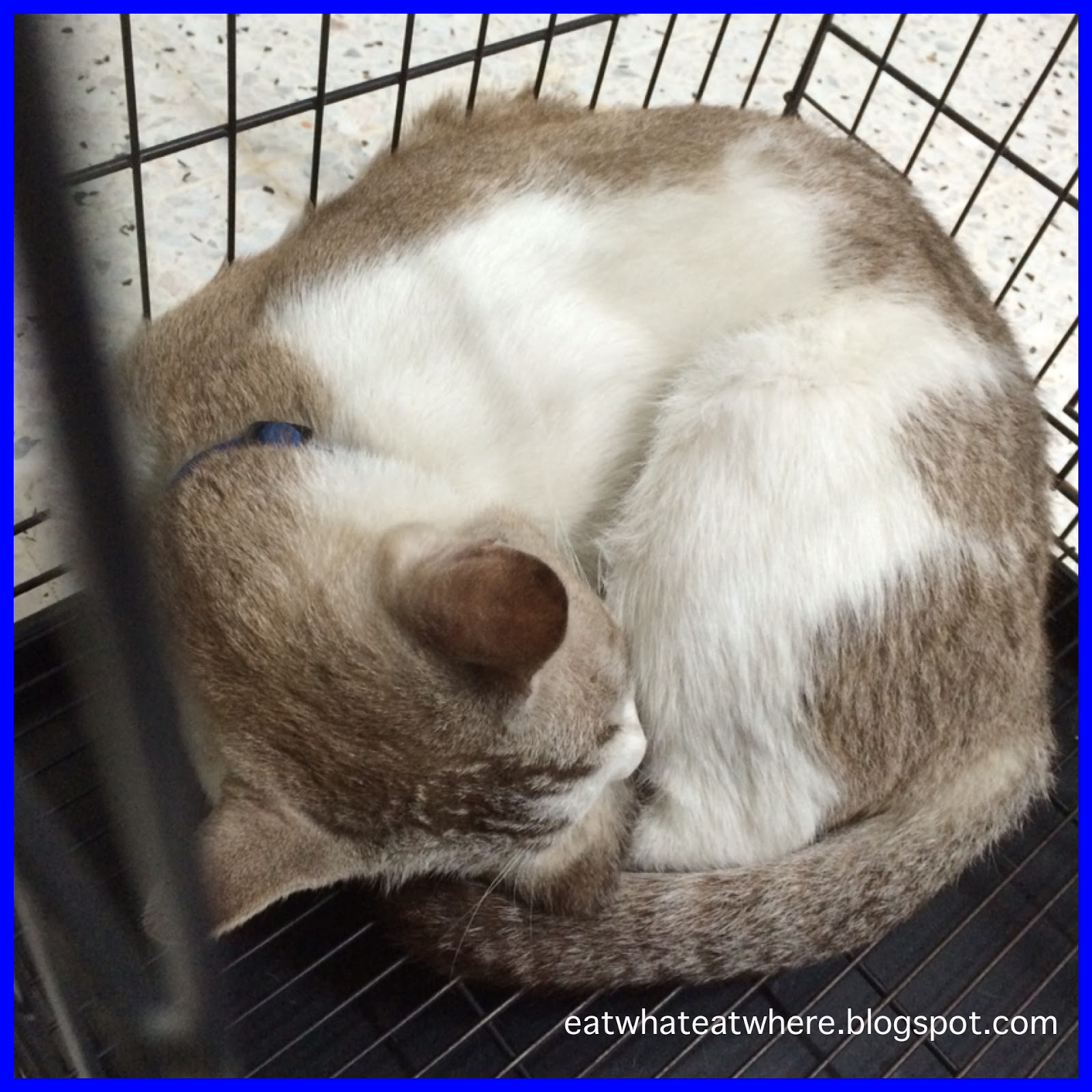 Eat what, Eat where?: Cookie's Sleeping Positions Explained