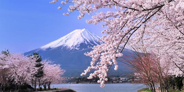 Hoa Anh Đào Nhật Bản và Núi Phú Sĩ
