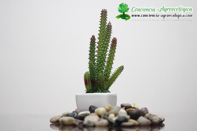 minijardines con cactus