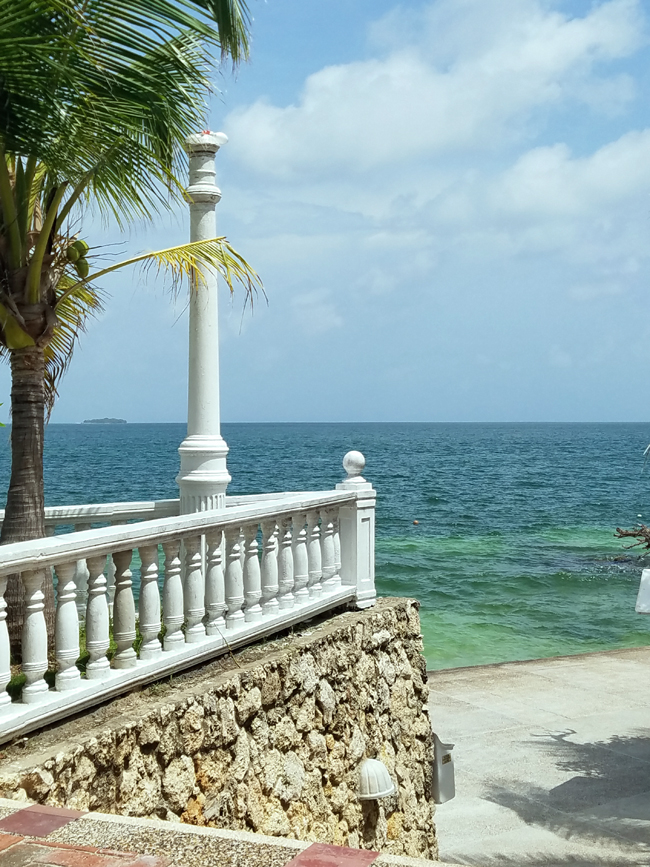 coconut tree and white railing overlooking the Atlantic Ocean