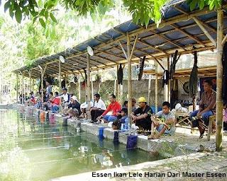 Essen Ikan Lele Harian Dari Master Essen