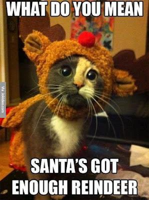 Funny Christmas Memes Tumblr