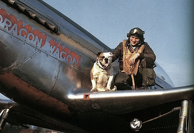 P-51 dog worldwartwo.filminspector.com