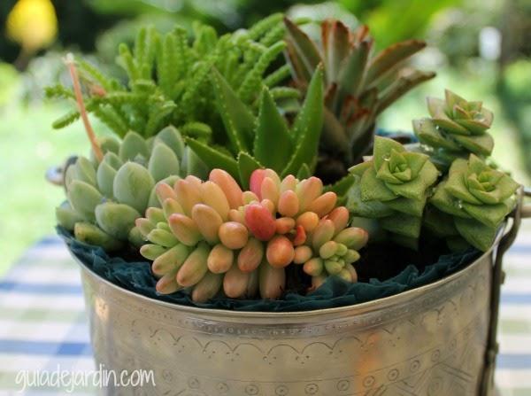 jardín de suculentas en un recipiente
