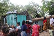 Akibat Angin Kencang, Rumah Warga Manarai Hancur Tertimpa Pohon