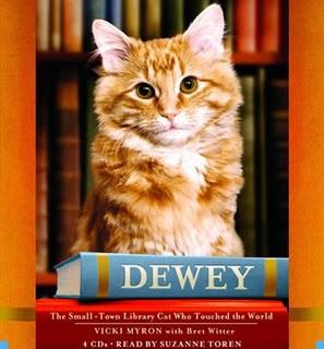 Кот из библиотеки