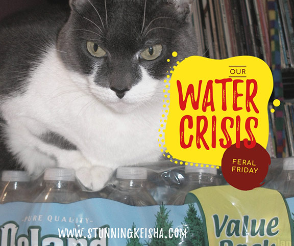 Feral Friday: Water Crisis