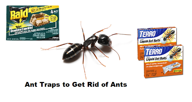 ANT TRAPS: GETTING RID OF ANTS WITH SPECIAL COMMERCIAL ANT TRAPS