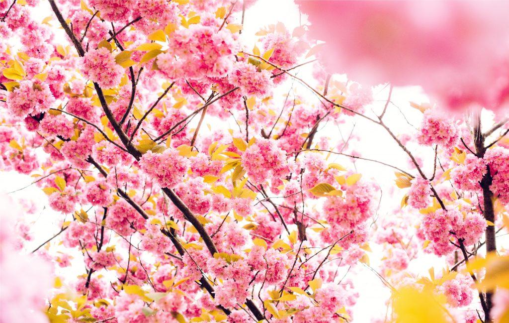 De orugas y Mariposas: Poemas de primavera para niños