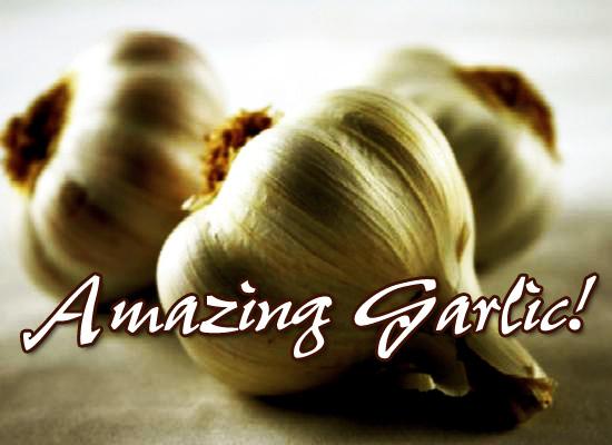 The Healthy Miracles of Garlic