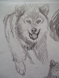 douglas deri, deri, deriart, 2D animation, animation, animacao 2D, cachorra, cachorro, cachorro cartoon, cartoon, cartoon dog, cartoon pig, cartoon wolf, cartoon wolf warrior, cartooning, desenho, desenhos, draw, drawing, guerreiro, lobo, pig, sketch, sketchbook