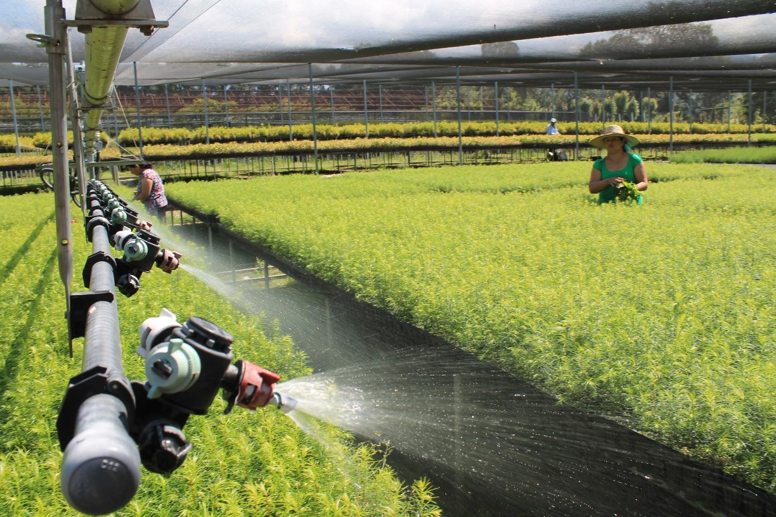 Desarrollo sustentable lista la producci n de planta en for Materiales para un vivero