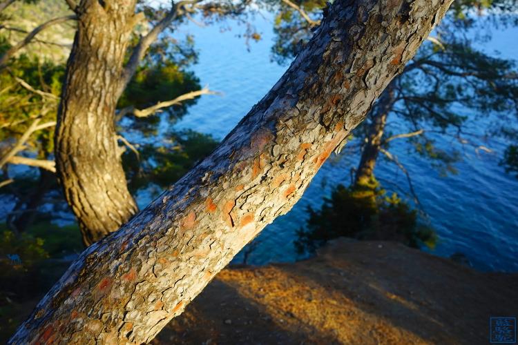 Le Chameau Bleu - Blog Voyage Brusc  -Tourisme Var Six Fours les Plages  - Nature et Paysage