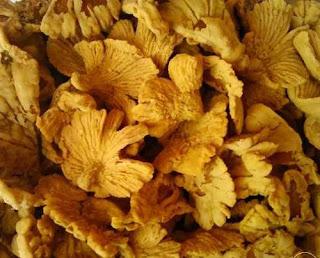 cara-membuat-keripik-jamur-tiram